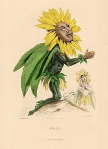 Art Prints of Sunflower by J. J. Grandville