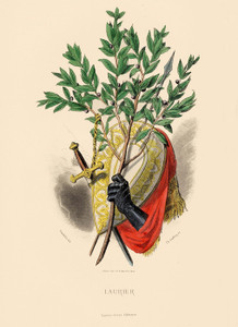 Art Prints of Sweet Bay, True Laurel by J. J. Grandville