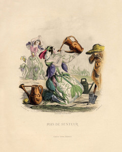 Art Prints of Sweet Pea by J. J. Grandville