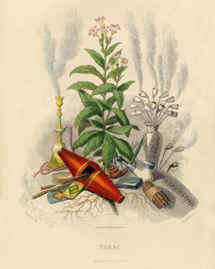 Art Prints of Tobacco by J. J. Grandville