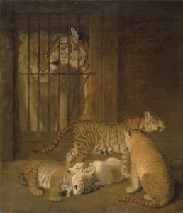 Art Prints of Whelps Bred between a Lion and a Tigress by Jacques-Laurent Agasse