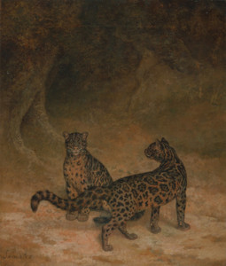 Art Prints of Clouded Leopards by Jacques-Laurent Agasse