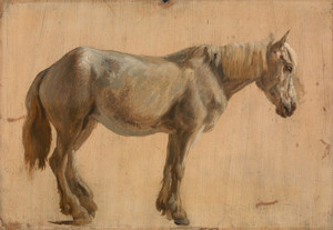 Art Prints of Study of a Grey Horse by Jacques-Laurent Agasse