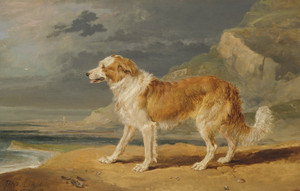Art Prints of Rough Coated Collie by James Ward