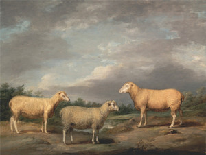 Art Prints of Ryelands Sheep, the King's Ram and Ewe by James Ward