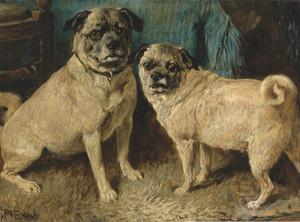 Art Prints of A Pair of Pugs by John Emms