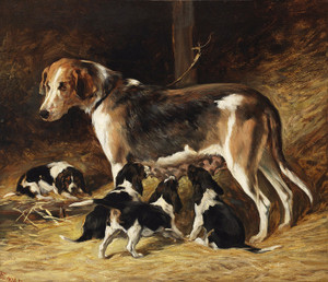 Art Prints of A Foxhound Feeding Her Pups by John Emms