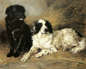 Art Prints of Retriever and Field Spaniel by John Emms