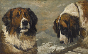 Art Prints of Study of a St. Bernard by John Emms