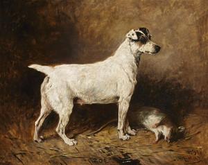Art Prints of Zoe, a Fox Terrier, 1896 by John Emms