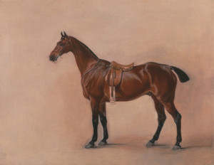 Art Prints of Study of a Saddled Bay Hunter by John Ferneley