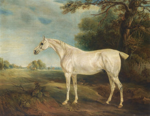 Art Prints of The Marquess of Huntly's Fleabitten Grey Hunter by John Ferneley