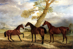 Art Prints of Three of Lord Rokeby's Hunters at Grass by John Ferneley