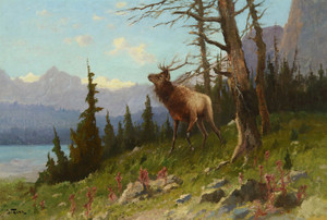 Art Prints of Elk in the Mountains by John Fery