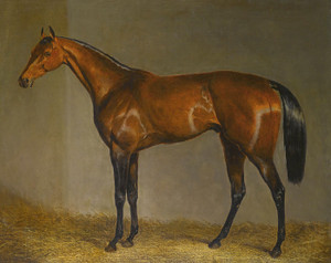 Art Prints of A Bay Racehorse in a Stable by John Frederick Herring