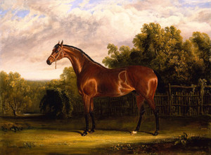 Art Prints of A Bay Horse in a Landscape by John Frederick Herring