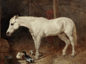 Art Prints of A Grey Horse in a Stable by John Frederick Herring