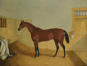 Art Prints of Bay Filly Beeswing in a Stable by John Frederick Herring
