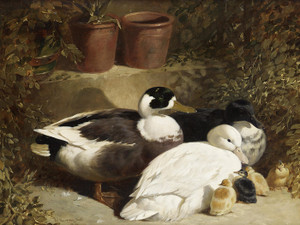 Art Prints of Ducks and Ducklings by John Frederick Herring