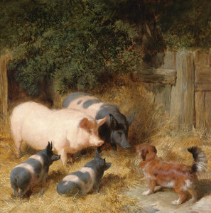 Art Prints of Farmyard Gossip by John Frederick Herring