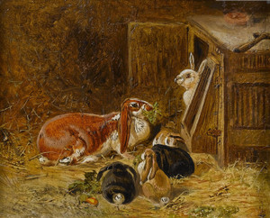 Art Prints of Study of Rabbits by John Frederick Herring