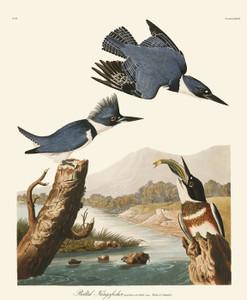 Art Prints of Belted Kingfisher by John James Audubon