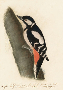 Art Prints of Great Spotted Woodpecker by John James Audubon