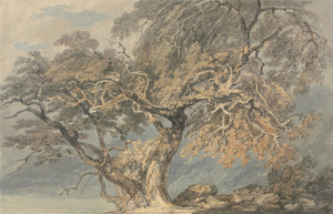 Art Prints of A Great Tree by Joseph Mallord William Turner