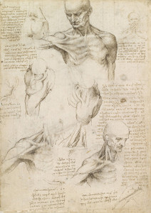 Art Prints of Superficial Anatomy of the Shoulder and Neck by Leonardo da Vinci