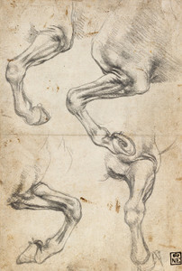 Art Prints of Studies of a Horse's Leg by Leonardo da Vinci