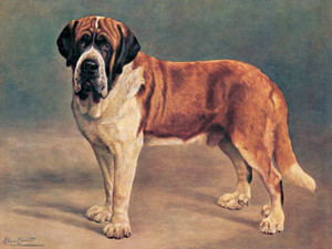 Art Prints of Smooth Coated Saint Bernard by Lilian Cheviot