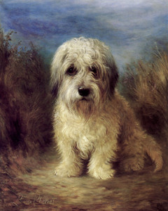 Art Prints of A Dandie Dinmont by Lilian Cheviot