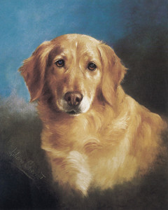 Art Prints of Gold Retriever, Head Study by Lilian Cheviot