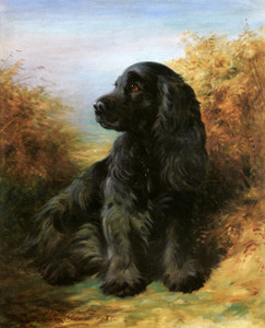 Art Prints of Portrait of a Cocker Spaniel, Cinder II by Lilian Cheviot