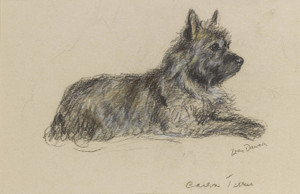 Art Prints of A Cairn Terrier by Lucy Dawson