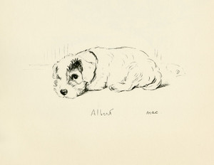Art Prints of Albert by Lucy Dawson