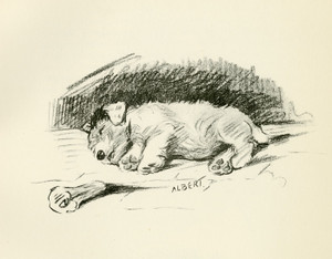Art Prints of Albert with a Bone by Lucy Dawson