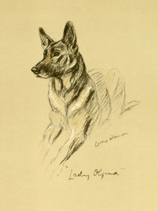 Art Prints of Alsatian Lady Olfina, German Shepherd by Lucy Dawson