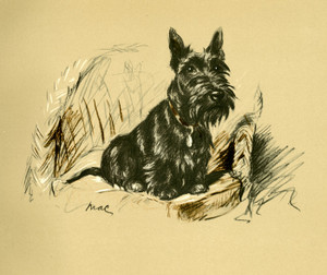 Art Prints of A Scottie by Lucy Dawson