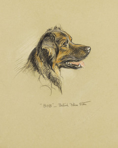 Art Prints of Bob British Film Star, a Shepherd by Lucy Dawson