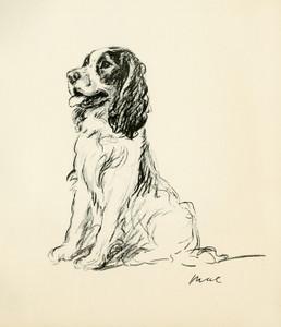 Art Prints of Cocker Spaniel, Mae by Lucy Dawson