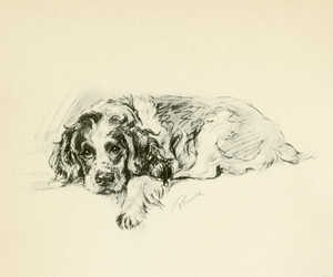 Art Prints of Cocker Spaniel, Prince by Lucy Dawson