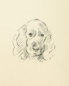 Art Prints of Cocker Spaniel II by Lucy Dawson