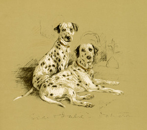 Art Prints of Dalmatians by Lucy Dawson