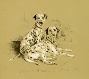 Art Prints of Dalmatians by Lucy Dawson