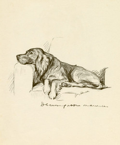 Art Prints of Drawing Room Manners, Setter by Lucy Dawson