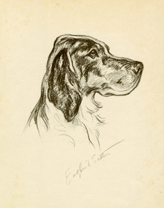 Art Prints of English Setter by Lucy Dawson