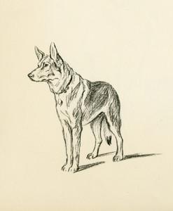 Art Prints of German Shepherd 2 by Lucy Dawson