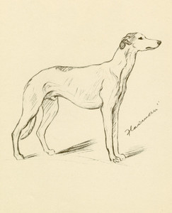 Art Prints of Flaxman, Greyhound by Lucy Dawson