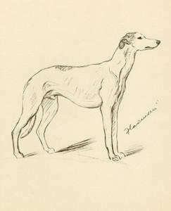 Art Prints of Flaxman, Greyhound by Lucy Dawson
